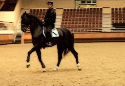 Méditation Equestre…